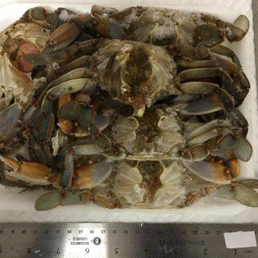 Crab - Gumbo