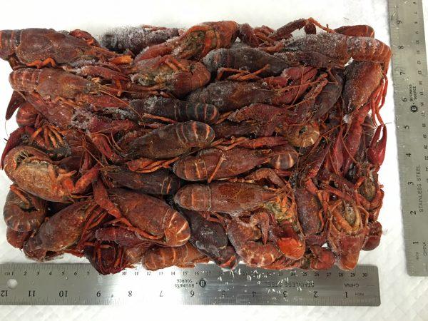 Crawfish - Whole