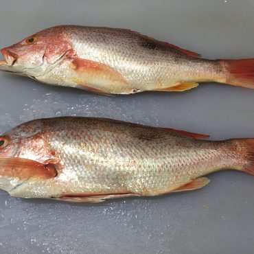 Snapper - Whole