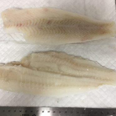 Flounder - Fillets Skinless