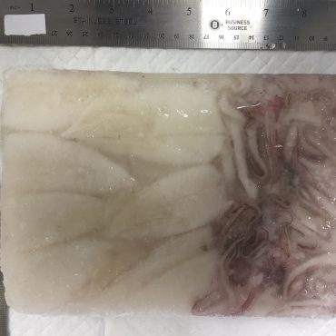Squid - T&T Medium
