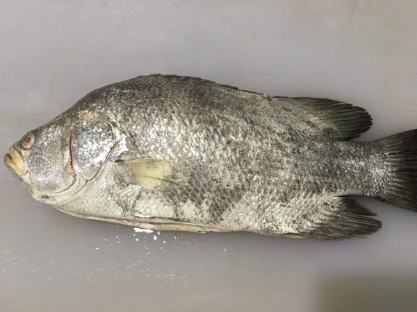 Tripletail - Whole
